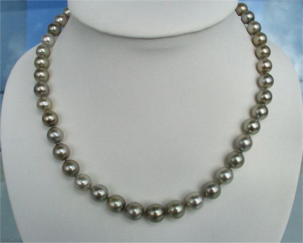 Black Pearls at SelecTraders